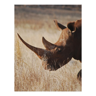 African black rhino with big horns customized letterhead