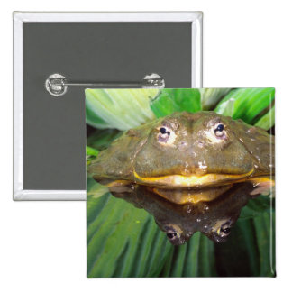 African Burrowing Bullfrog, Pyxicephalus 2 2 Inch Square Button