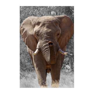 African bush elephant acrylic wall art