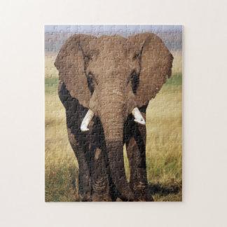 African Bush Elephant Jigsaw Puzzle