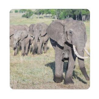 African Bush Elephant (Loxodonta Africana) 2 Puzzle Coaster