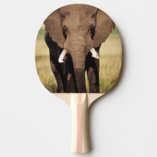 African Bush Elephant Ping-Pong Paddle