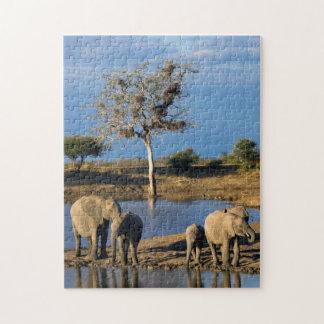 African Bush Elephants (Loxodonta Africana) Jigsaw Puzzles