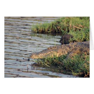 African crocodile note card. card