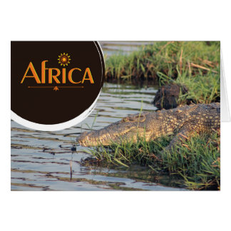 African crocodile notecard
