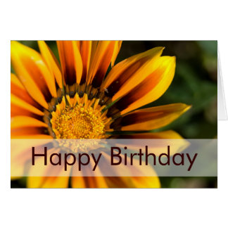 African Daisy • Birthday Card