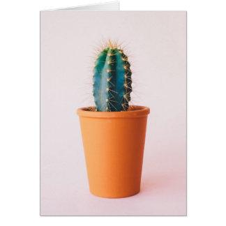 african-daisy card