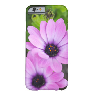 African Daisy Flowers Barely There iPhone 6 Case