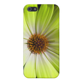 African Daisy Fluorescent Yellow iPhone 4 Case
