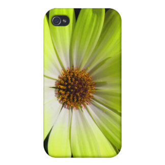 African Daisy Fluorescent Yellow  iPhone 4 Cases