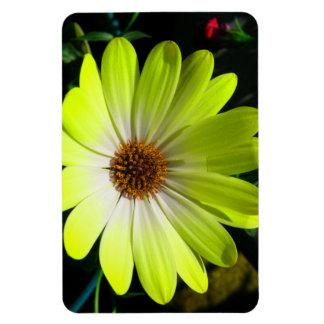 African Daisy Fluorescent Yellow Premium Magnet