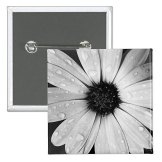 African Daisy in Black and White 2 Inch Square Button