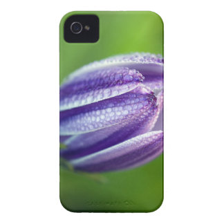 african-daisy iPhone 4 Case-Mate cases
