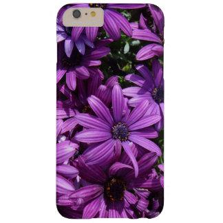 African daisy photo case