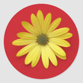 African Daisy Sticker