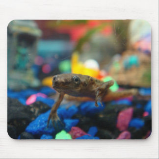 African Dwarf Frog Mouse Pad