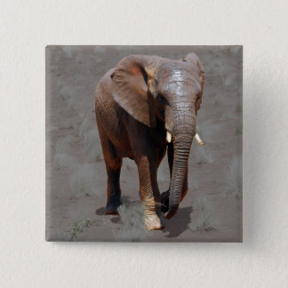 African elephant 2 inch square button