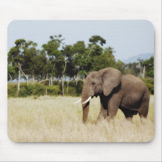 African elephant bull mouse pad