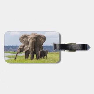 African Elephant Family, Botswana, Luggage Tag