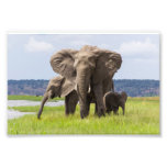 African Elephant Family, Botswana, Photo Print