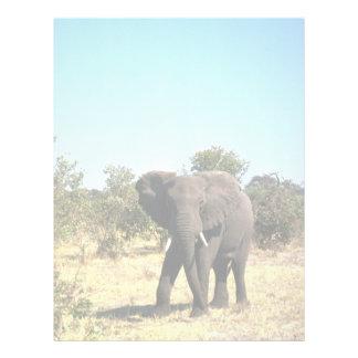 African Elephant Customized Letterhead