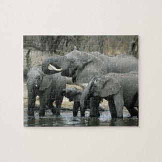 African Elephant, (Loxodonta africana), drinking Puzzles