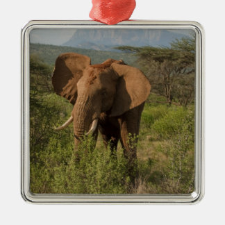 African Elephant, Loxodonta africana, in Samburu Silver-Colored Square Ornament