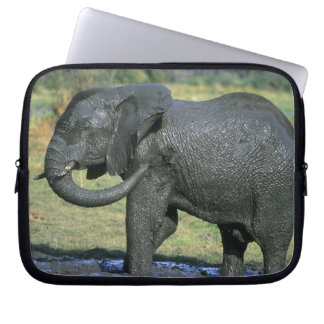 African Elephant, (Loxodonta africana), mud Laptop Sleeve