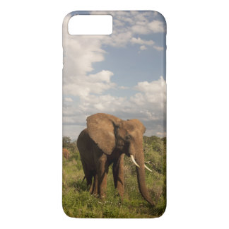 African Elephant, Loxodonta africana, out in a iPhone 7 Plus Case