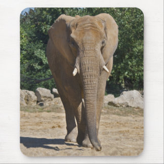 African Elephant Mousemat Mouse Pad