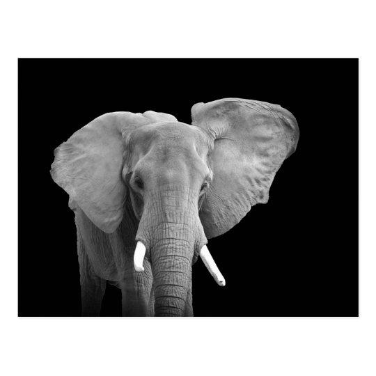 African Elephant on Black - Postcard