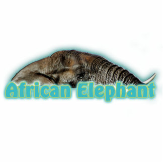 African elephant photo sculpture wildlife magnets