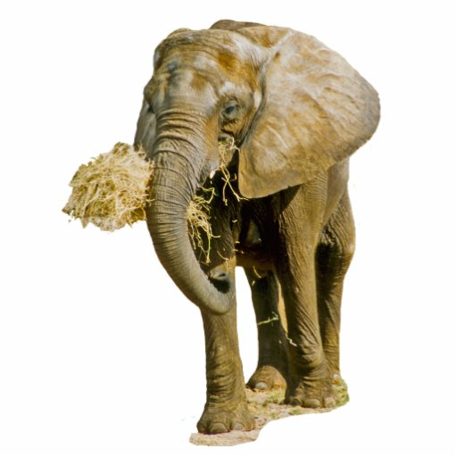 African Elephant Photo Cut Out