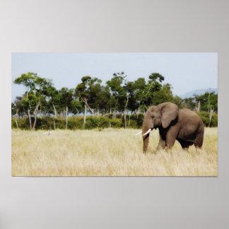 African Elephant - portfolio size Poster