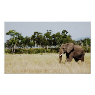 African Elephant poster print wall hanging
