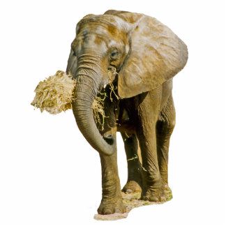 African Elephant Standing Photo Sculpture
