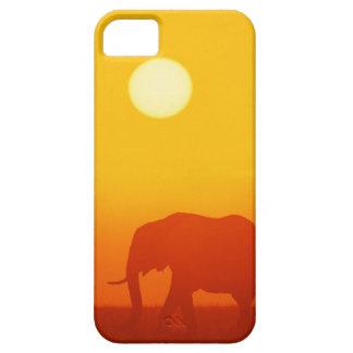 African elephant walking at sunset , Kenya , iPhone 5 Case