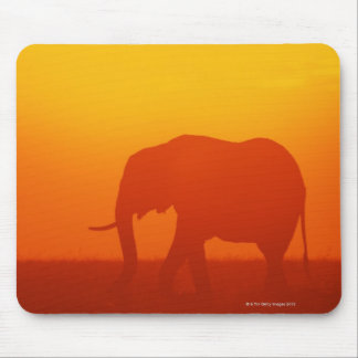 African elephant walking at sunset , Kenya Mouse Pad