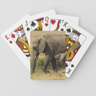 African Elephants at water pool Poker Deck
