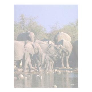 African Elephants - Breeding Herd At Water Letterhead Template