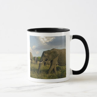 African Elephants grazing, Loxodonta africana, Mug