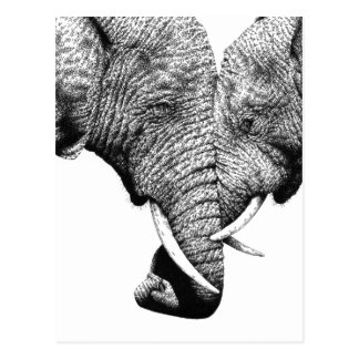 African Elephants Postcard