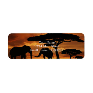 African elephants silhouettes in sunset