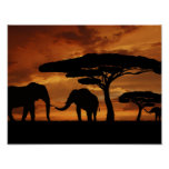 African elephants silhouettes in sunset poster