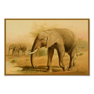 African Elephants Vintage Animal Art Print