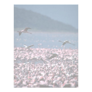 African Flamingos Personalized Letterhead