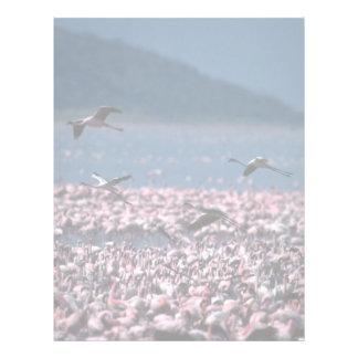 African Flamingos Letterhead Template