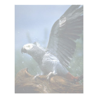African gray parrot in hose shower letterhead template