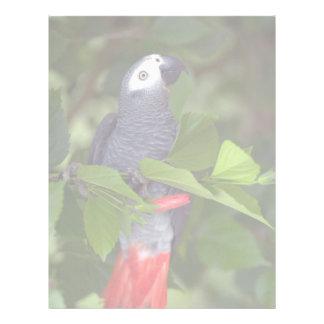 African gray parrot letterhead design