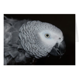 African Grey Note Card